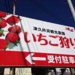 津久井浜観光農園でいちご狩り!駐車場や周辺情報をご紹介【体験談】