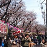 弘明寺の桜まつりに行ってきた♪屋台や混雑具合についてご案内!