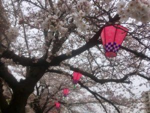 戸塚桜まつりのぼんぼり