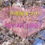 戸塚桜まつり2019!柏尾川の開花状況と屋台やライトアップは?随時更新中♪