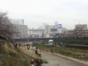 戸塚桜まつり2019の様子