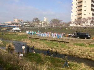戸塚柏尾川桜祭り2019年の様子