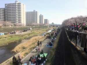 戸塚桜祭りの混雑具合