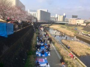 戸塚桜祭りの花見客
